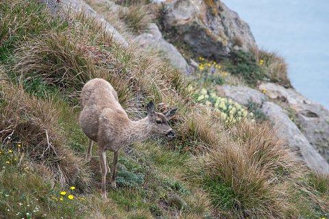 A doe, a deer...